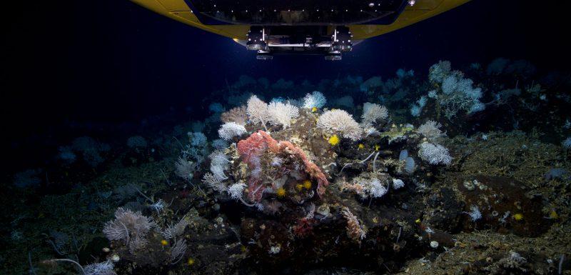 corals-Capelinhos